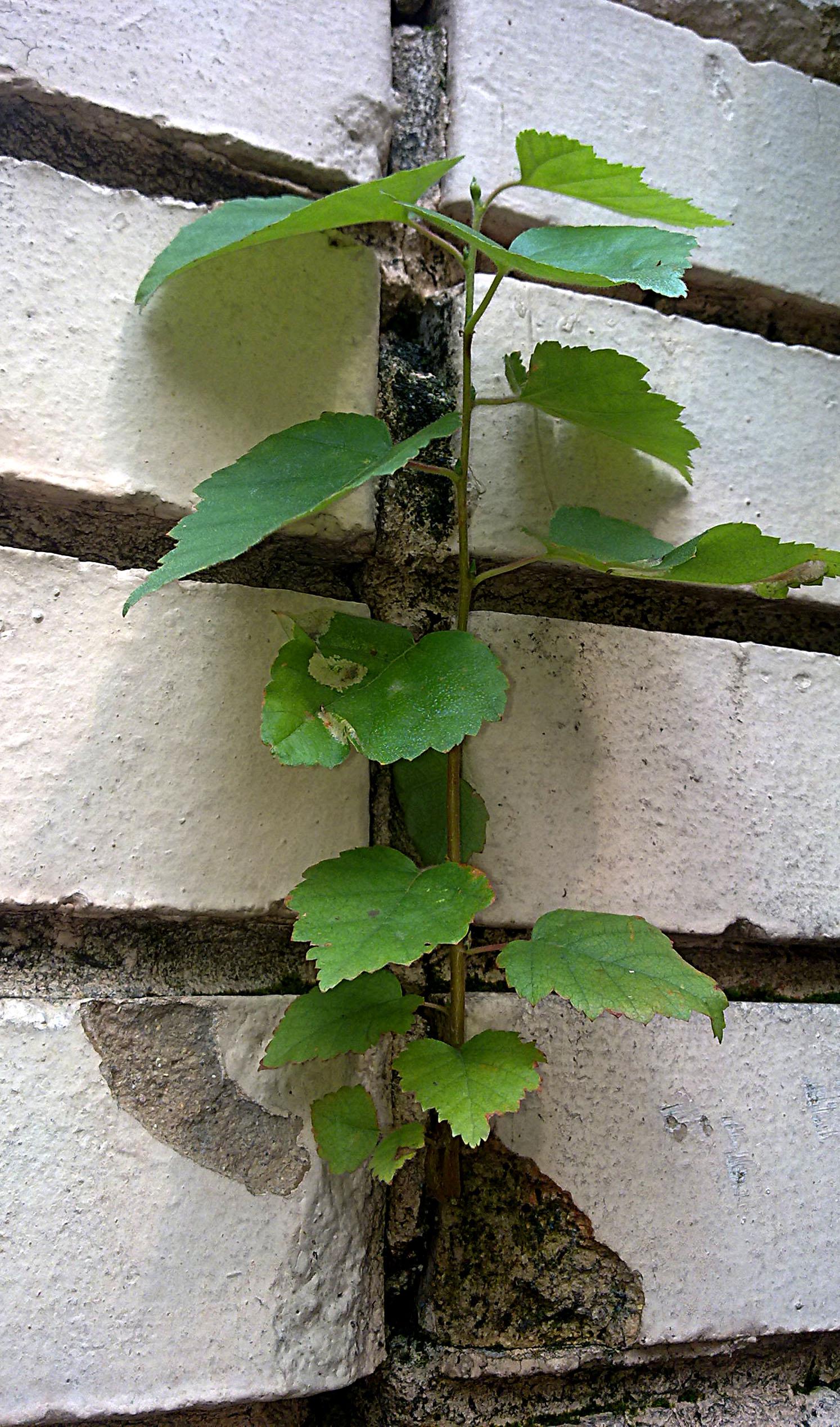 Растение в кирпичах